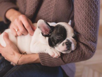 Dette kan dine børn lære af at have kæledyr